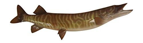 36 Tiger Musky Half Mount Fish Replica - Low Price Guarantee - Perfect Coastal Themed Wall Decor