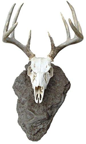 Antlerock Deer European Skull Mount