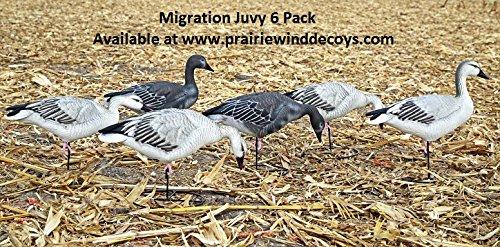Migration Series Fullbody Juvies Snow Goose Decoys 6pk by Dakota Decoys