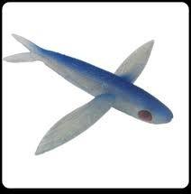Frenzy BSF-BLR Ballistic Flying Fish