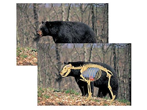 Safari Press Perfect Shot North American Target Black Bear 24 x 36 Package