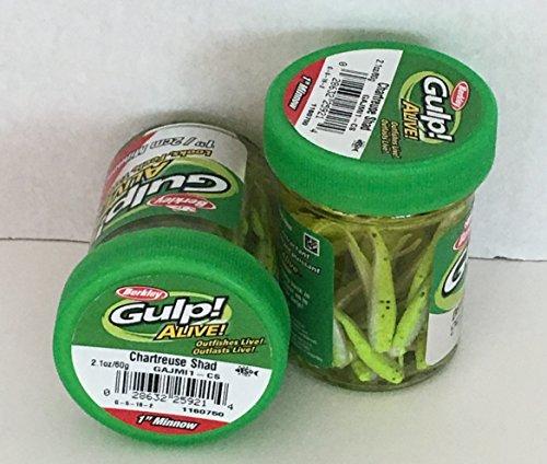 GULP Bait 1 INCH CHARTREUSE SHAD MINNOW 2 jar bundle BERKLEY gulp Alive perch minnows ice fishing bait Panfish minnows